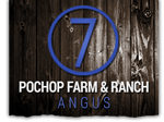 Pochop Farm & Ranch Angus logo