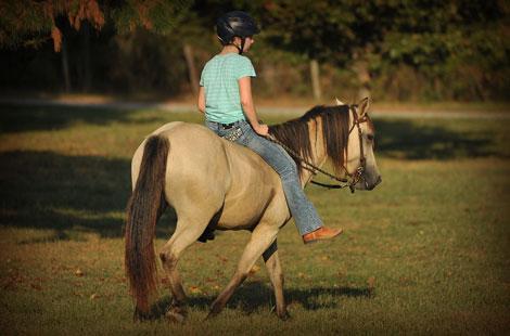 SOLD - Kid / beginner broke all around gelding and mare pony/horse