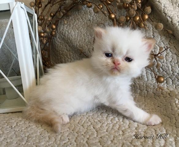 Free Kittens In Wichita Ks - Find Best 4k Wallpapers
