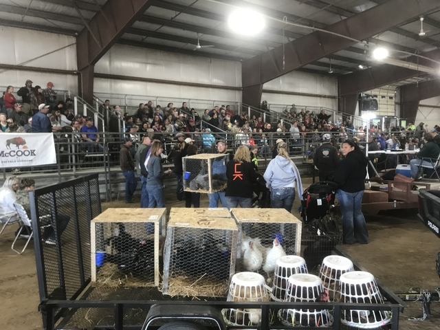 Heartland Exotic Bird and Animal Auction - DiscoverStuff