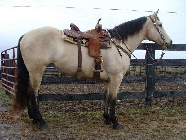 Finished Open Rodeo Barrel Horse And Finished Head Heel