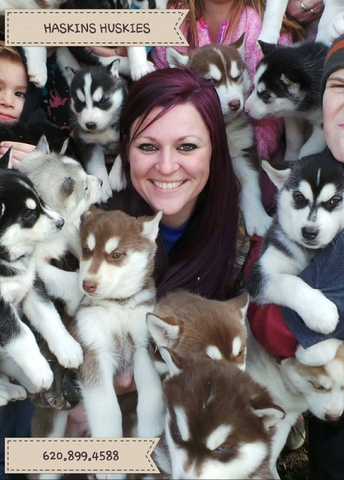 Purebred Siberian Husky Puppies Nex